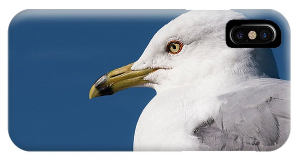 Ring-billed Gull Portrait IPhone Case