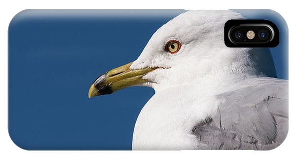 Ring-billed Gull Portrait IPhone Case