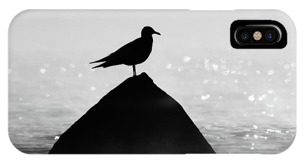 Ring-billed Gull Silhouette IPhone Case