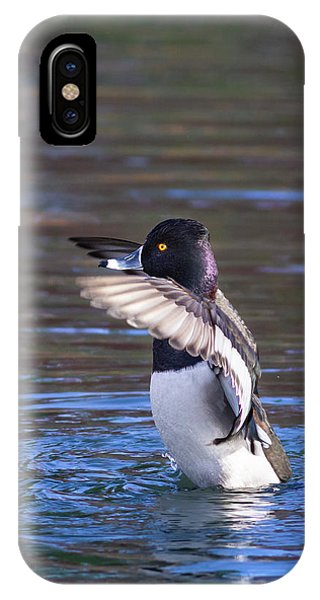 Ring-necked Duck Wings Up IPhone Case