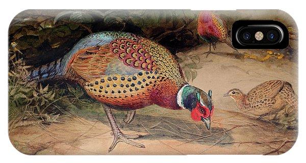 Ring Necked Pheasant IPhone Case