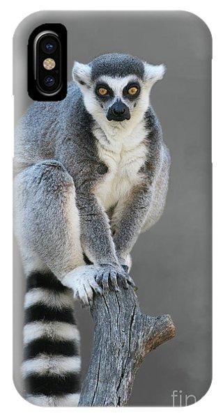 Ring-tailed Lemur #6 V2 IPhone Case