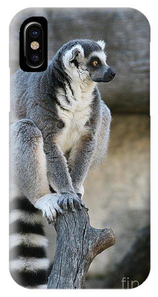 Ring-tailed Lemur #7 IPhone Case