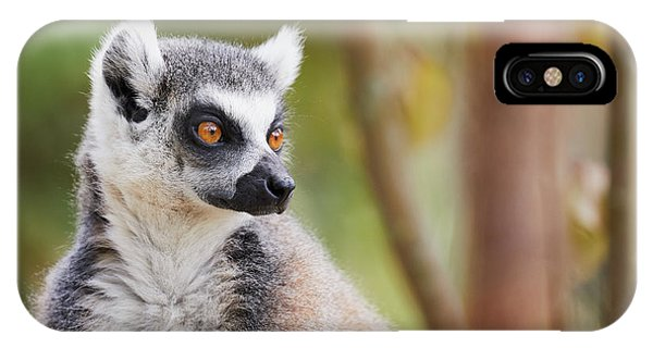 IPhone Case featuring the photograph Ring-tailed Lemur Closeup by Nick Biemans