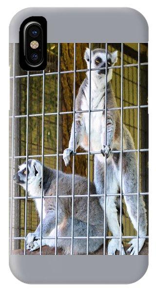 Ring-tailed Lemur iPhone Case - Ring-tailed Lemur by Jeelan Clark