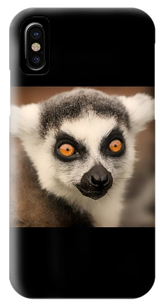 Ring Tailed Lemur Portrait IPhone Case