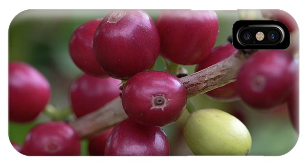 IPhone Case featuring the photograph Ripe Kona Coffee Cherries by Susan Rissi Tregoning