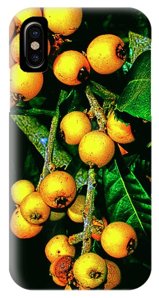 Ripe Loquats IPhone Case