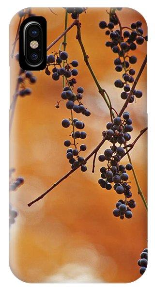 Ripe Wild Grapes  IPhone Case