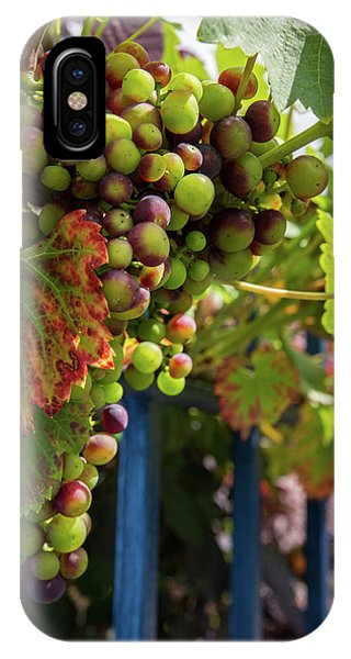 IPhone Case featuring the photograph Ripening Grapes by Geoff Smith