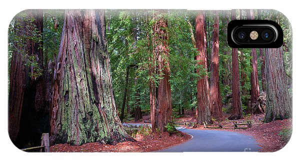 Road Through Redwood Grove IPhone Case