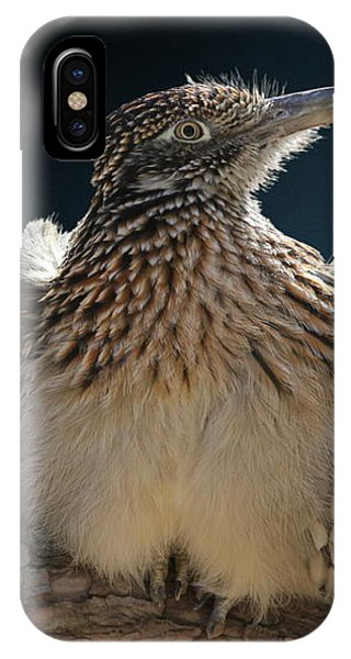 Roadrunner On A Log IPhone Case
