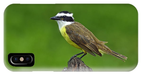 Roadside Kiskadee IPhone Case