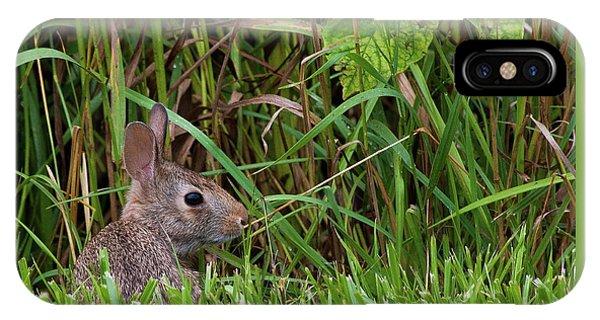 Roadside Rabbit IPhone Case
