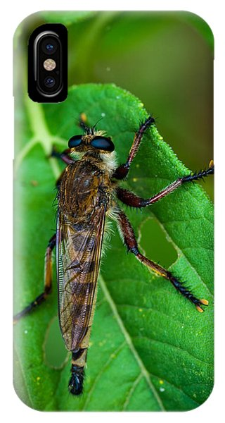 Robber Fly 1 IPhone Case