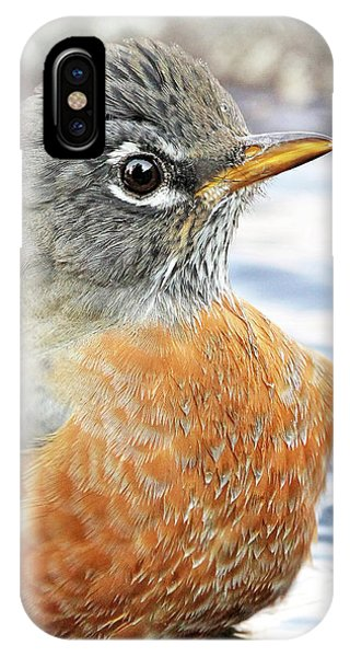 IPhone Case featuring the photograph American Robin In The Bird Bath by Jennie Marie Schell