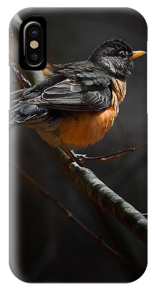 Robin In The Light IPhone Case