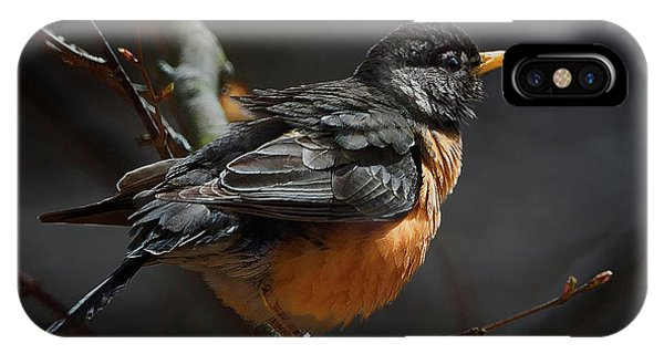 Robin In The Light Square IPhone Case