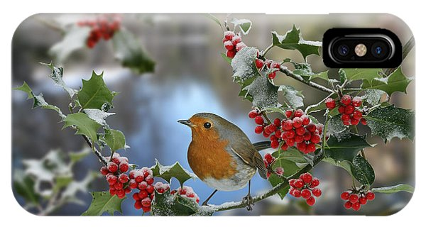Robin On Holly Branch IPhone Case