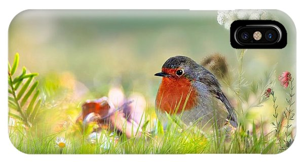 Robin Red Breast IPhone Case