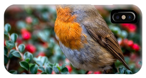 Robin Redbreast IPhone Case