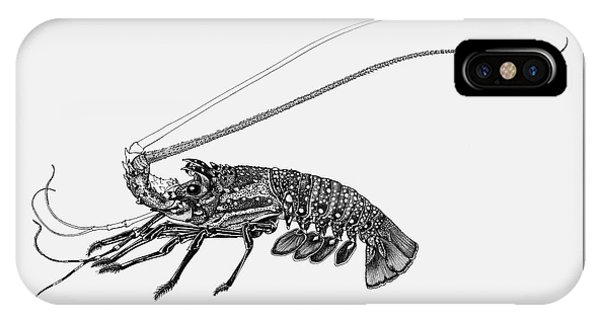 IPhone Case featuring the drawing Rock Lobster by Judith Kunzle