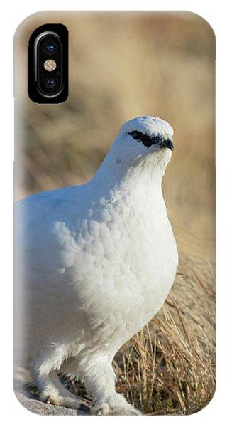 Rock Ptarmigan IPhone Case