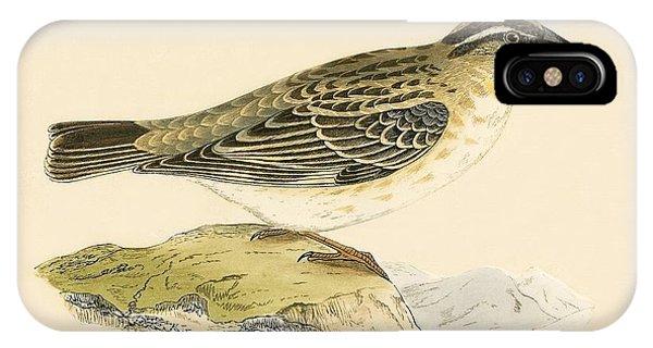 Rock Sparrow IPhone Case
