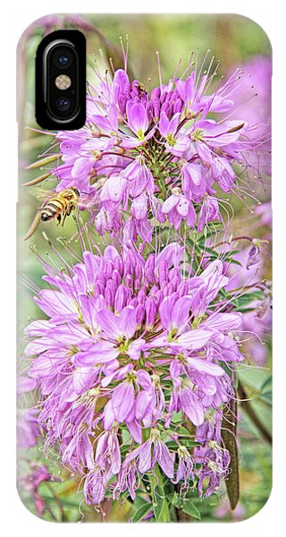 IPhone Case featuring the photograph Rocky Mountain Bee Plant by Jennie Marie Schell