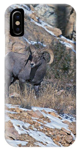 Rocky Mountain Bighorn Sheep iPhone Case - Rocky Mountain Big Horn Ram  by Gary Langley