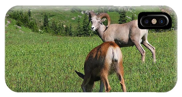 Rocky Mountain Bighorn Sheep iPhone Case - Rocky Mountain Bighorn Sheep Ram And Mule Deer Doe Glacier National Park Mt by Christine Till