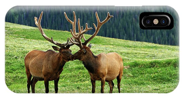 Rocky Mountain Elk 2 IPhone Case