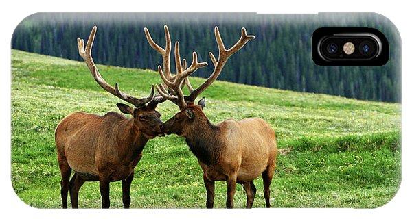 Rocky Mountain Elk 2 IPhone Case