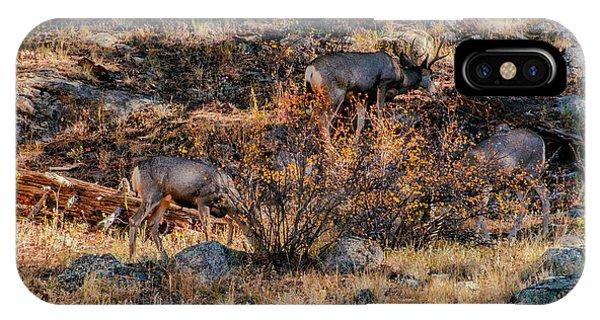Rocky Mountain National Park Deer Colorado IPhone Case