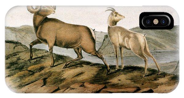 Audubon iPhone X Case - Rocky Mountain Sheep, 1846 by Granger