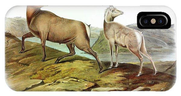 Rocky Mountain Bighorn Sheep iPhone Case - Rocky Mountain Sheep by John James Audubon