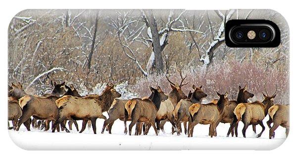 Rocky Mountain Winter Elk IPhone Case