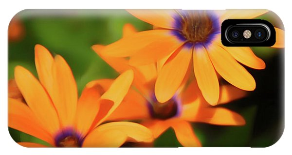 Romantic Slies Orange Daisy IPhone Case