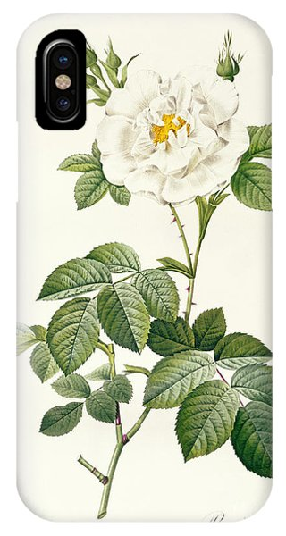 Botanical iPhone Case - Rosa Alba Flore Pleno by Pierre Joseph Redoute