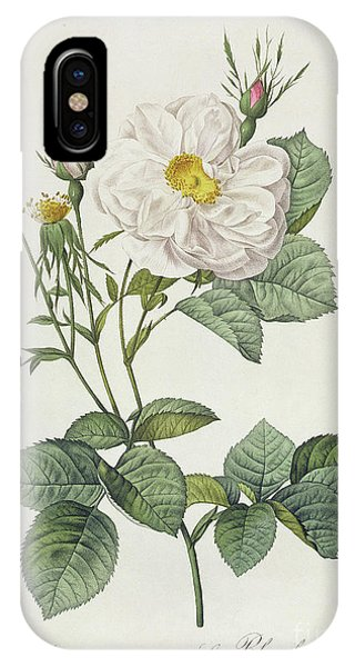 Botanical iPhone Case - Rosa Alba Foliacea by Pierre Joseph Redoute