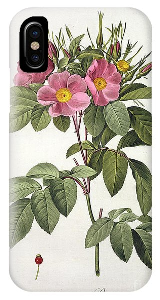 Botanical iPhone Case - Rosa Carolina Corymbosa by Pierre Joseph Redoute