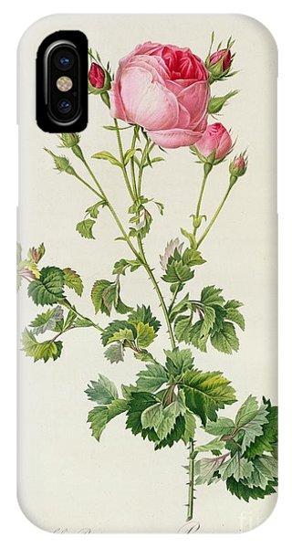 Redoute iPhone Case - Rosa Centifolia Bipinnata by Pierre Joseph Redoute