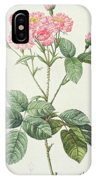 Rosa iPhone Case - Rosa Centifolia Caryophyllea by Pierre Joseph Redoute