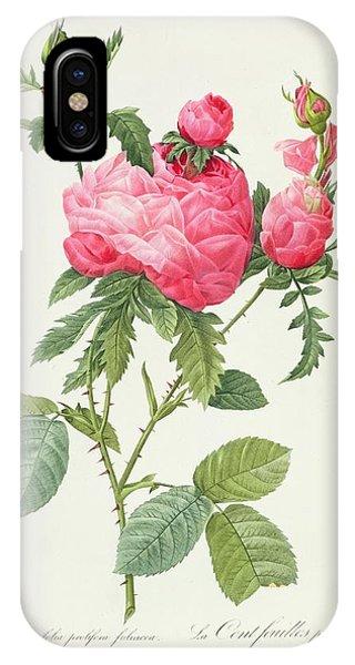 Rosa iPhone Case - Rosa Centifolia Prolifera Foliacea by Pierre Joseph Redoute