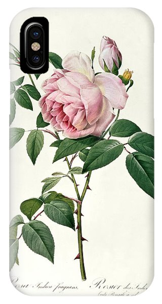 Botanical iPhone Case - Rosa Chinensis And Rosa Gigantea by Joseph Pierre Redoute