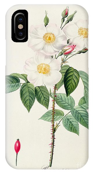 Redoute iPhone Case - Rosa Damascena Subalba by Pierre Joseph Redoute