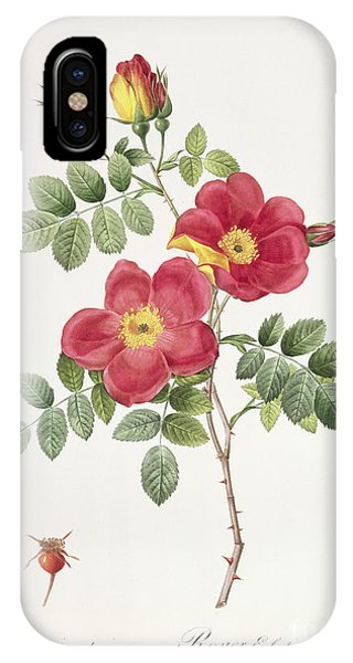 Botanical iPhone Case - Rosa Eglantera Punicea by Pierre Joseph Redoute