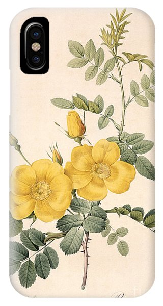 Botanical iPhone Case - Rosa Eglanteria by Pierre Joseph Redoute