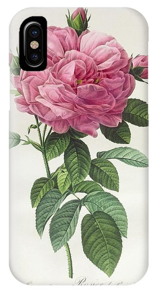Botanical iPhone Case - Rosa Gallica Flore Giganteo by Pierre Joseph Redoute