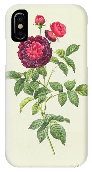 Redoute iPhone Case - Rosa Gallica Gueriniana by Pierre Joseph Redoute